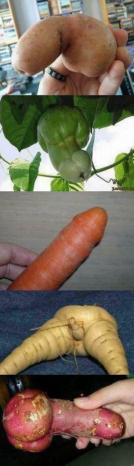 Penis Vegetable 74
